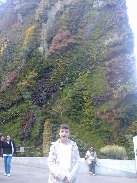 primavera paredes